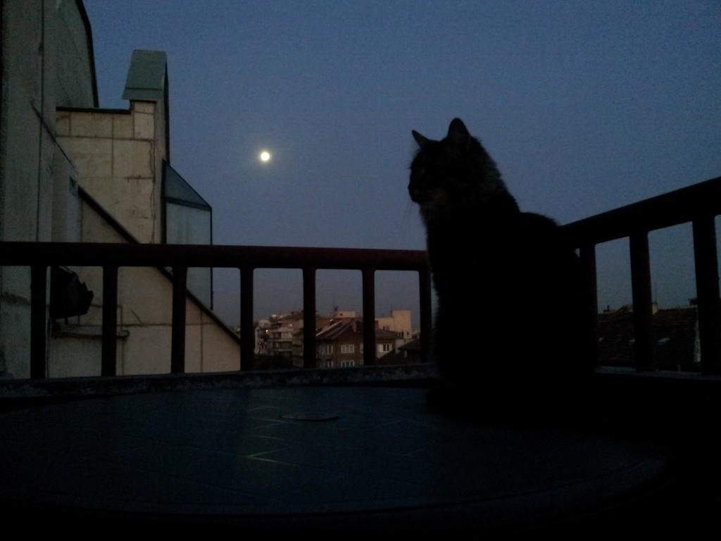 Каспар на Лунна светлина 01.10.2012 07:01:38